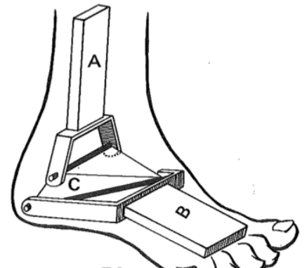 Anatomie de la cheville
